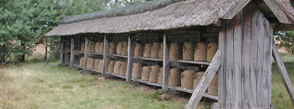 Intensivierter Bienenschutz