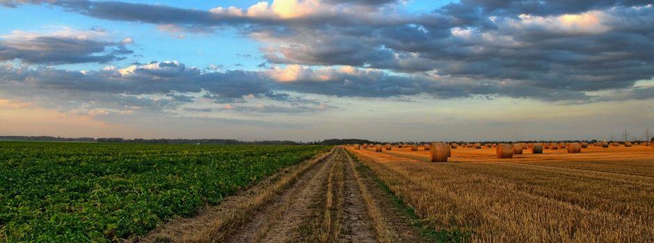 Landwirtschaft im Heidekreis