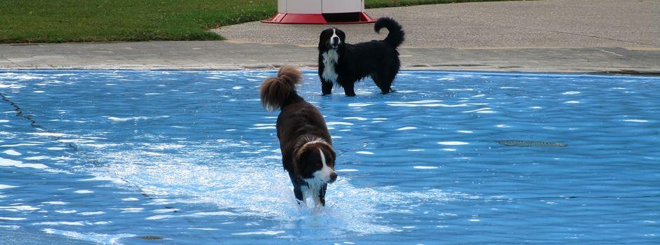 Hunde dürfen wieder im Freibad Maaraue schwimmen