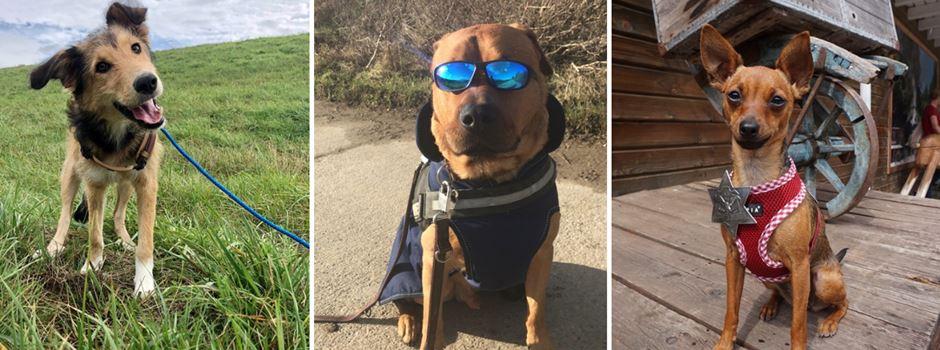 Die coolsten Hunde aus Mainz und Umgebung