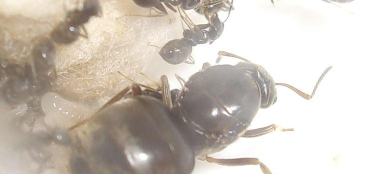 Gibt es eine Ameisen-Plage in Mainz?