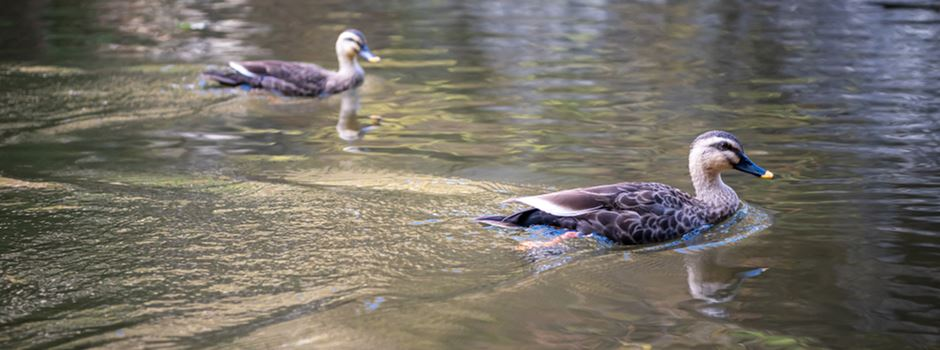 Tote Vögel im Nerotal geben Rätsel auf