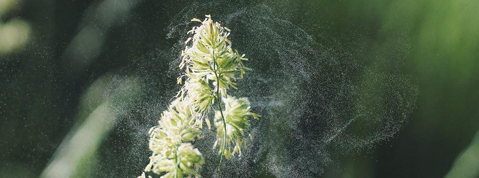 Augsburger Forscher erfinden KI für Allergiker