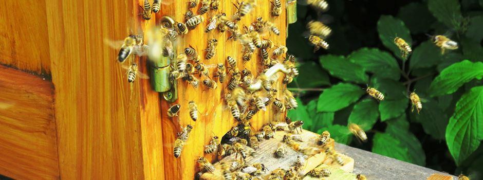 Ungeliebt aber nützlich – Tipps zum Umgang mit Wespen