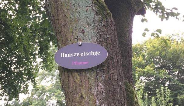 Obst auf Gemeinde-Bäumen darf gepflückt werden