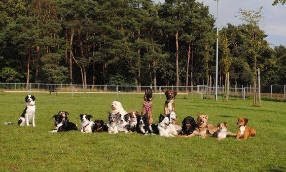 Hundeverein auf Suche nach Vereinsgelände
