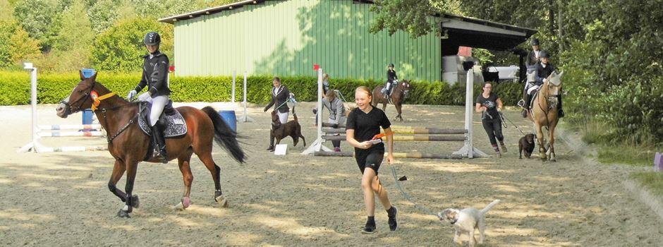 Pferde, Hunde und Reiter schwer auf Trab