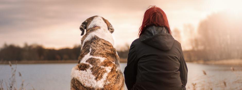 5 Dinge, die man nur kennt, wenn man Hundebesitzer ist