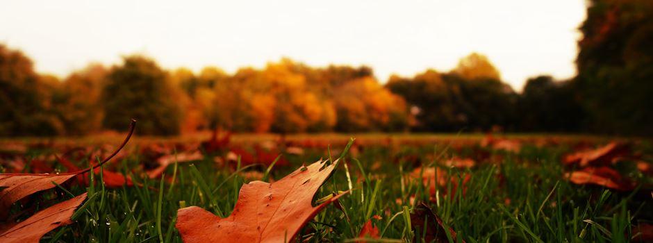 Gründe, warum wir uns auf den Herbst freuen