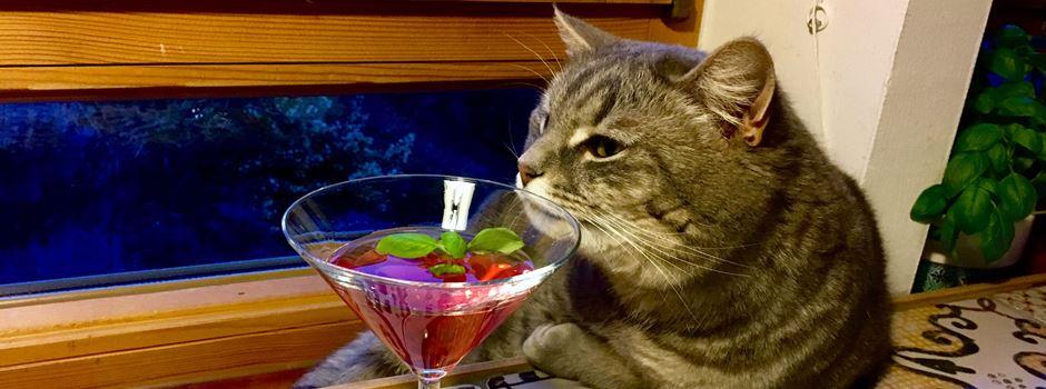 Am Freitag könnt Ihr Euch lustige Katzenvideos im Kino anschauen