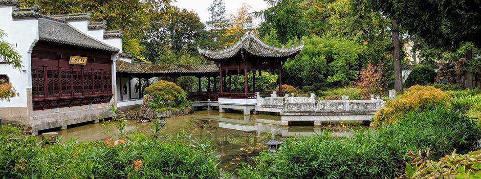 Der Chinesische Garten im Bethmannpark wird wiedereröffnet