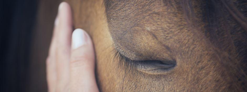 Pferd mit Schnittverletzungen gibt Rätsel auf