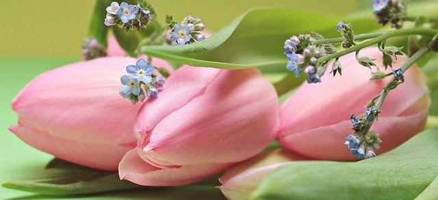 Frühlingsblumen-Zeit: 5 Augsburger Blumenläden