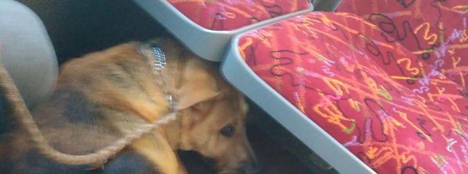 Auto für alten Hund - Facebook-Post berührt Mainzer