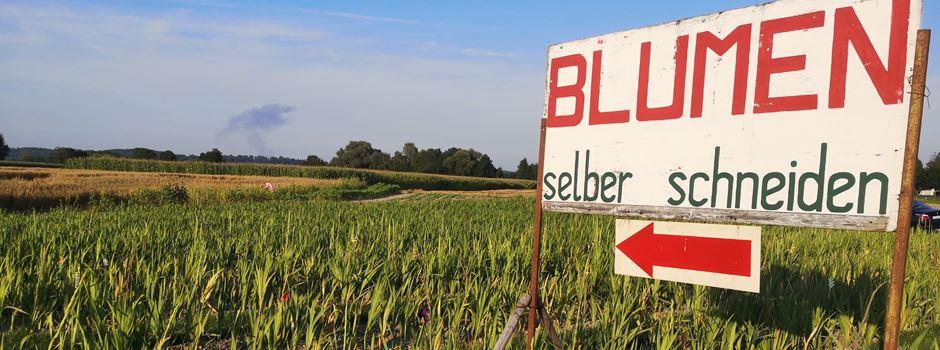 Blumenfelder in Augsburg: Gladiolen und Co. selbst scheiden