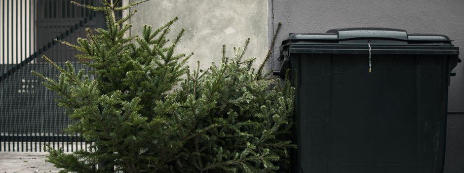 So werdet Ihr Euren Weihnachtsbaum los