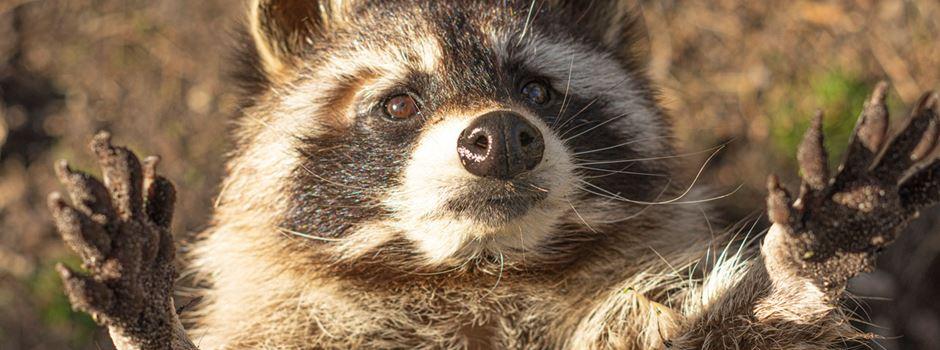 Auch Wildpark Müden stark von der Coronakrise betroffen