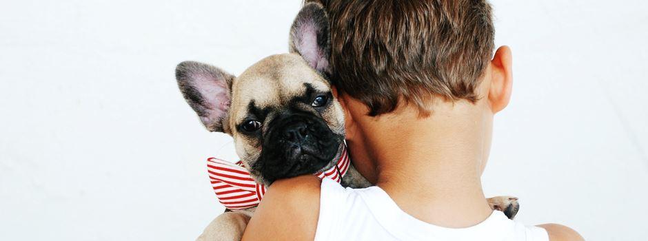 Studie: Corona-Pandemie stärkt Bindung zwischen Mensch und Hund