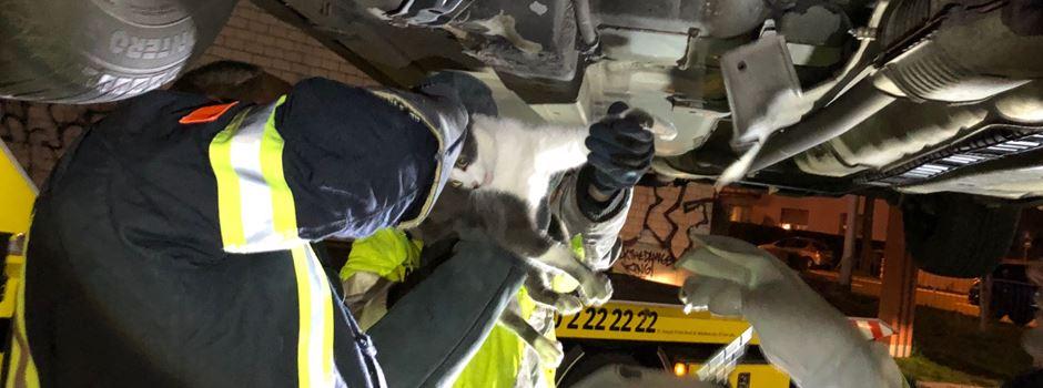 Katze eingeklemmt: Feuerwehr befreit blinden Passagier aus Auto