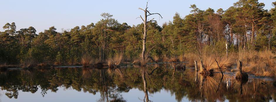 Warum werden am Pietzmoor große Flächen abgeholzt?