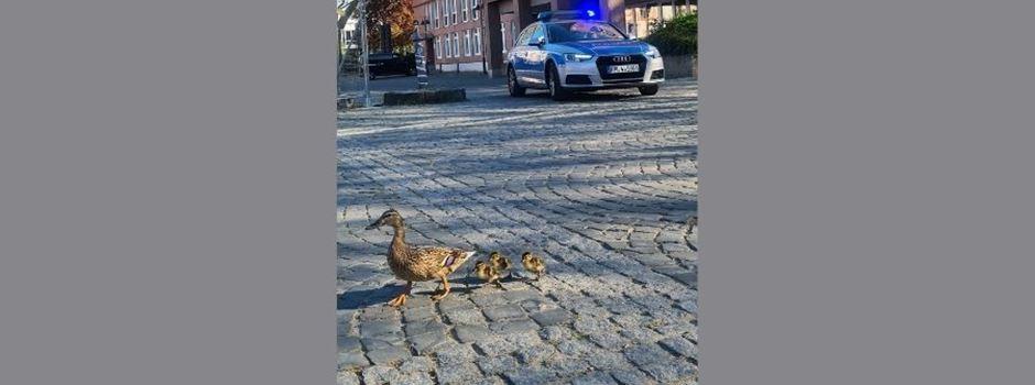 Geleitschutz: Hier watschelt eine Entenfamilie durch die Mainzer City