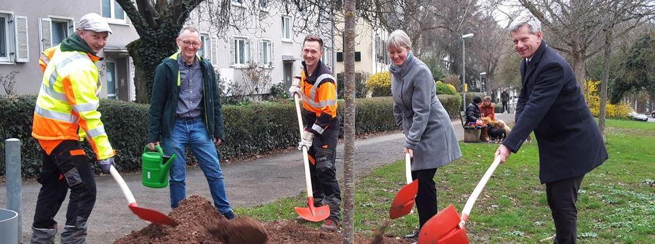 In Wiesbaden werden bald exotische Stadtbäume gepflanzt
