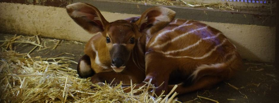 Seltener Nachwuchs im Frankfurter Zoo