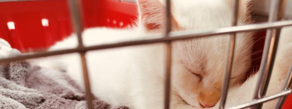 BEENDET: GEWINNSPIEL: Wir suchen die süßeste Katze Niederkassels