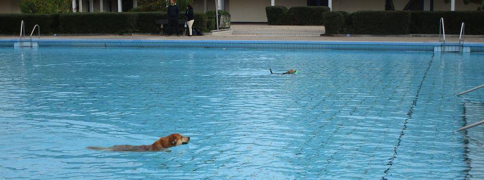 Hunde dürfen wieder in Mainzer Freibädern schwimmen