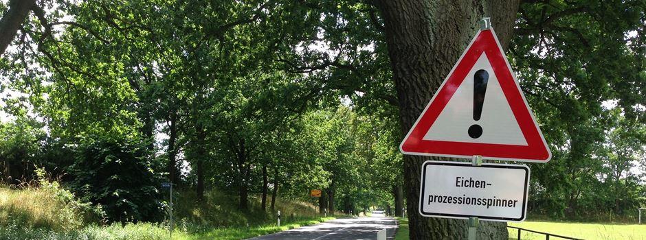 Gefährliche Eichenprozessionsspinner auch in Augsburg?