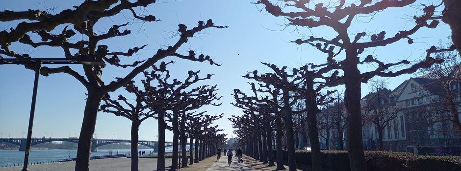 Bis zu 24 Grad: Nächste Woche gibts den Super-Frühling in Mainz
