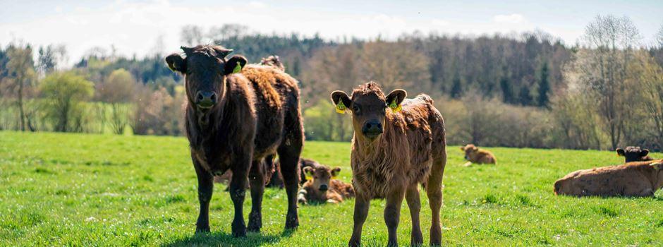 Start-up: Weidefleisch aus der Region für die Augsburger Supermärkte