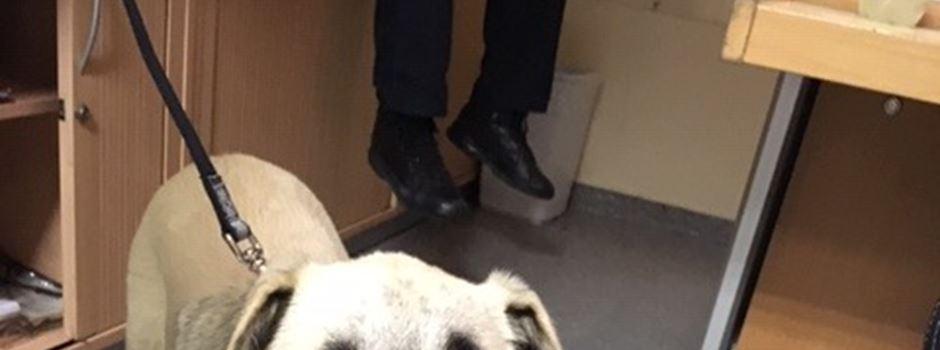 Ausgesetzter Hund: Fall mit kurioser Wendung