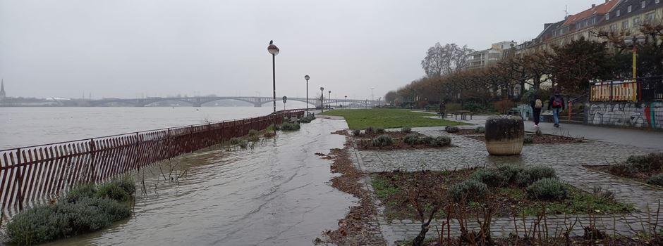Bildergalerie: Hochwasser in Mainz