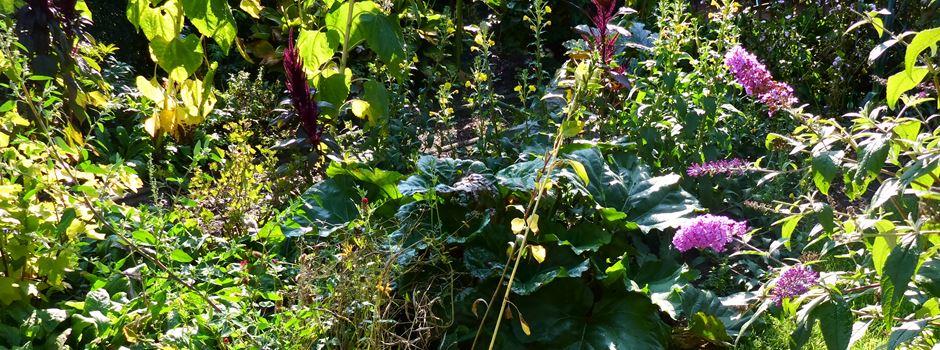 Fotoprojekt: Auch im Spätsommer sind naturnahe Gärten schön