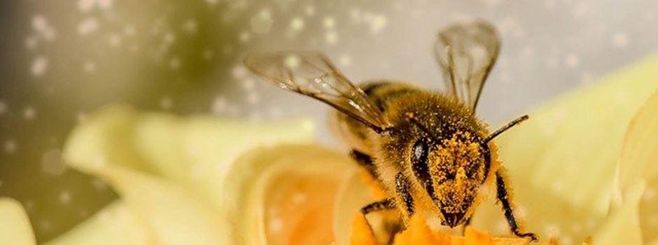 Von Bienchen und Blümchen: Die Good News der Woche