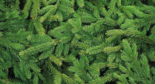 Weihnachtsbaumkauf in Augsburg: regional und ungespritzt