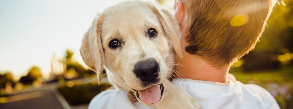 Augsburger Hund wird Buchheld