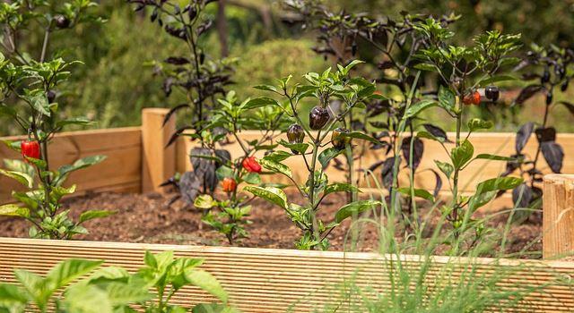 Urban Gardening Projekte in Augsburg