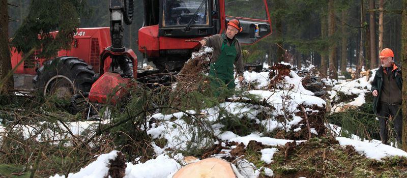 Ende der Waldsperrungen ab 1. März