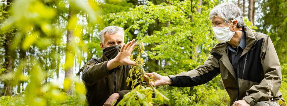 Waldumbauprojekt: 10.630 Eichen für mehr Wasser in den Heidequellen