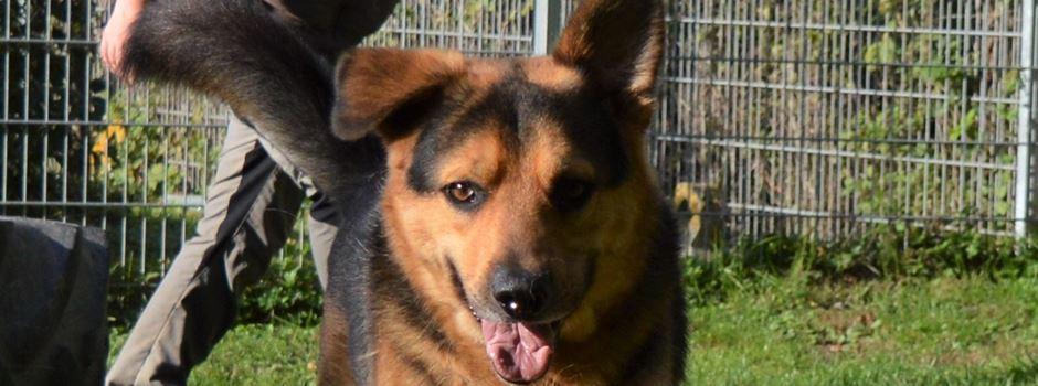 Gute Nachricht für kranken Schäferhund Balou