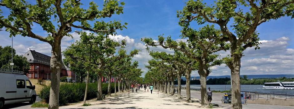 Bodenbelag am Rheinufer wird erneuert