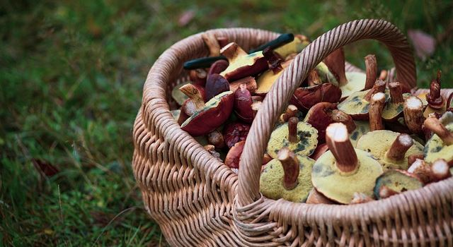 Pilze sammeln und bestimmen: Tipps von Augsburger Pilzexperten