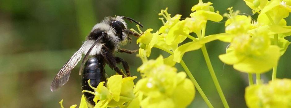 3 Tipps zur Förderung der Artenvielfalt