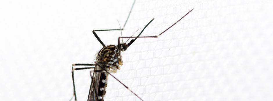 Was kann man gegen Mücken in der Wohnung tun?