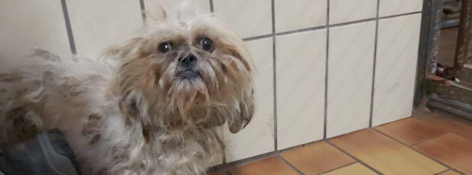 Happy End: Dritter ausgesetzter Hund in Naurod gefunden