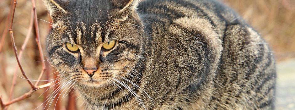 Polizei sucht nach Katzen-Quäler